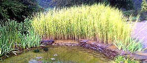 Reed Bed Filtration