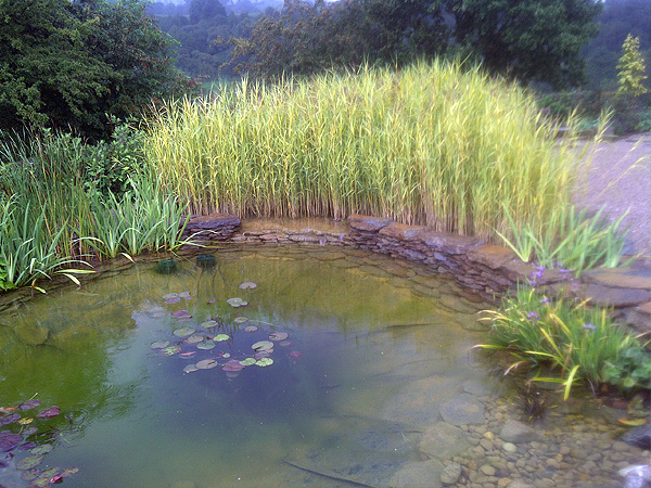 Reed Bed Filtration Project